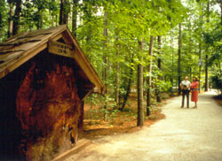 Clemmons Educational Forest